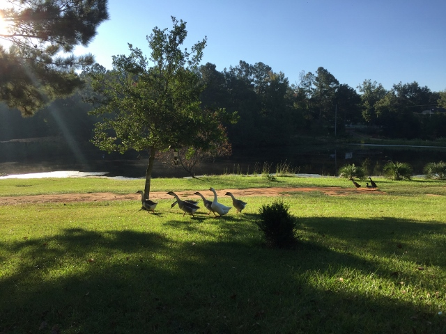 South Carolina farm life